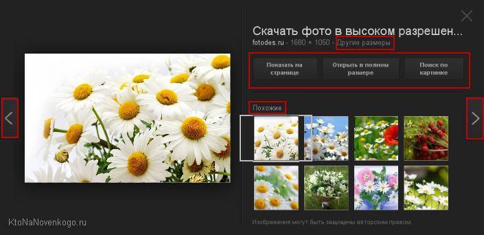 Интерфейс сервиса Гугл Картинки
