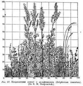 Аспект в ботанике
