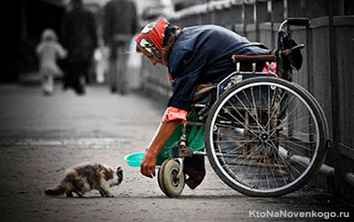 Бабушка кормит котенка