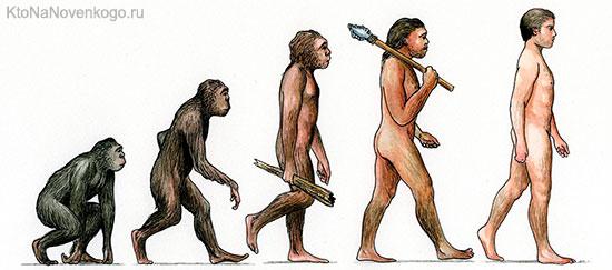 Доказательства эволюции челоека