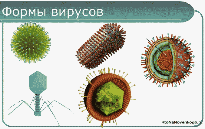 Форма вирусов