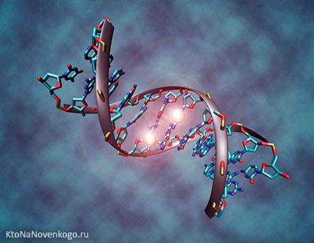Что такое мутации и какие их виды  различают (геномные, генные, хромосомные и другие)