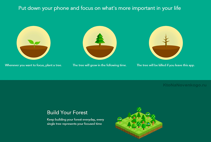 главная страница forest