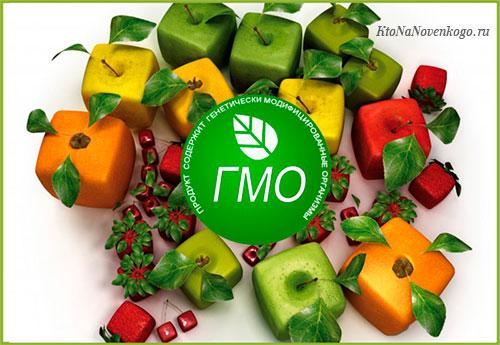Что такое ГМО и каково его влияние на человека