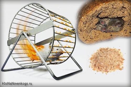 Ироничное отображение хлебных крошек для сайта