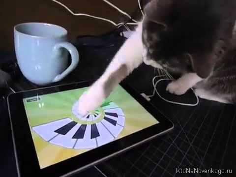 Кот играет в планшет