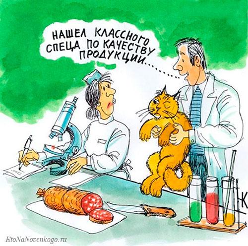 Шутка на тему квалификации эксперта (кот дегустирует колбасу)