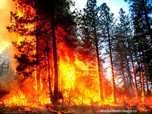 Пожар: определение, виды, методы тушения, правила безопасности
