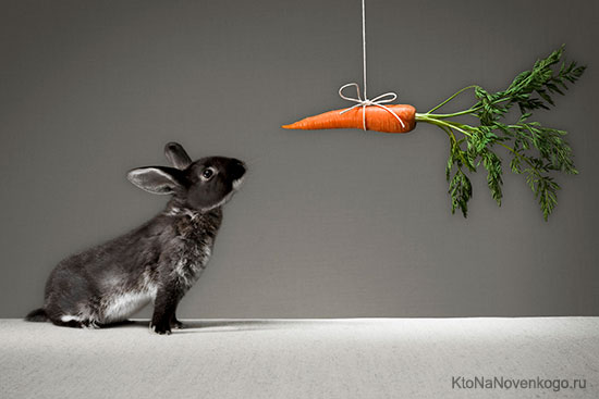 Мотив для кролика