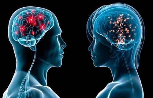 Мозг мужчины и женщины смотрящих друг на друга