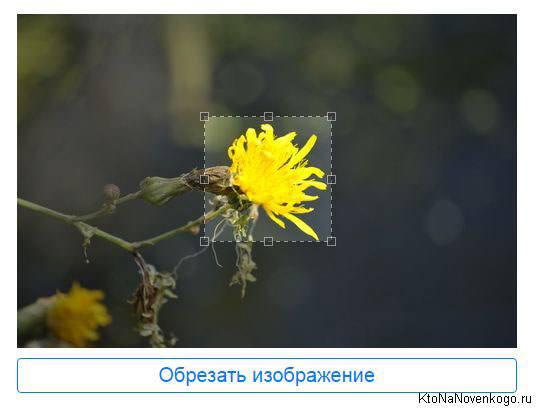 Обрезать изображение в croppiconline.com