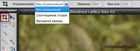 Обрезка фото в онлайн фоторедакторе