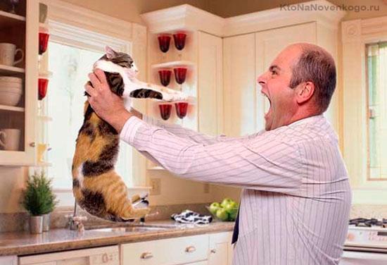Ругают кота