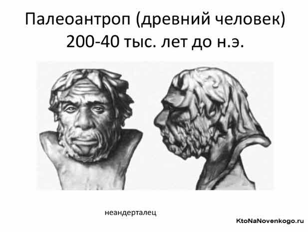 Палеантропы в антропогенезе