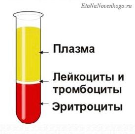 Состав крови - плазма и форменные элементы (лейкоциты, тромбоциты, эритроциты)