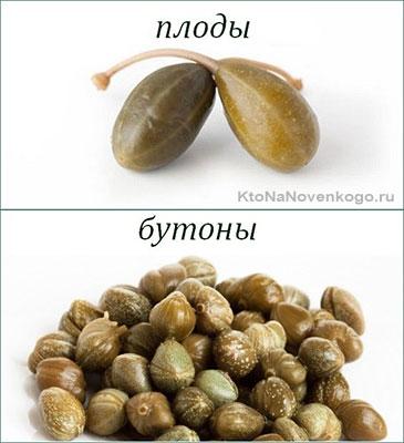 Плоды и бутоны