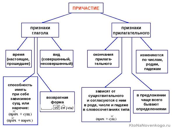 Признаки глагола и прилагательного