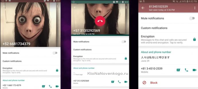 Профиль Момо в WhatsApp