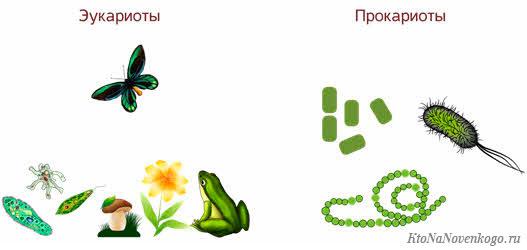 Организмы