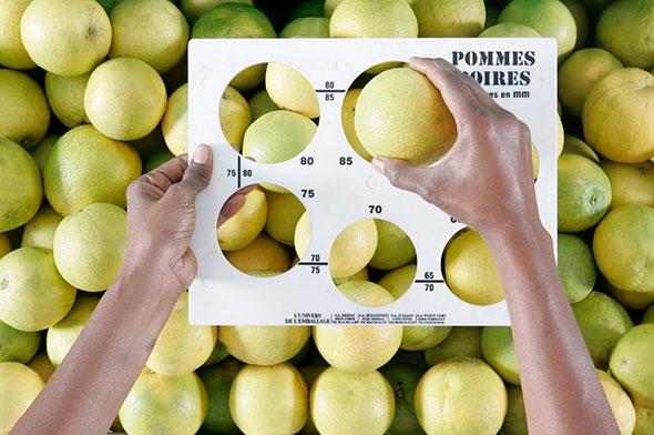 Стандартизация лимонов по размеру с помощью шаблона