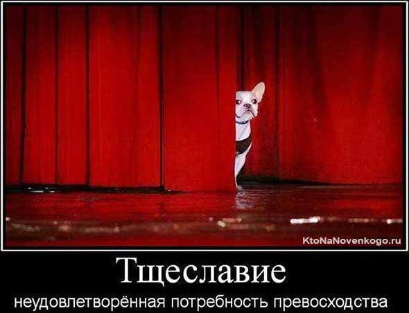 Собака на сцене