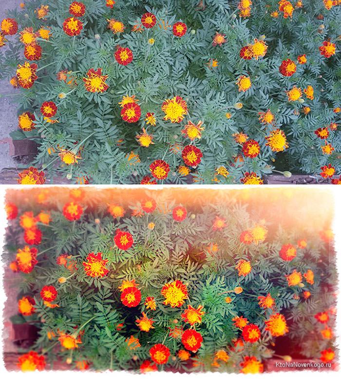 цветы до и после коррекции