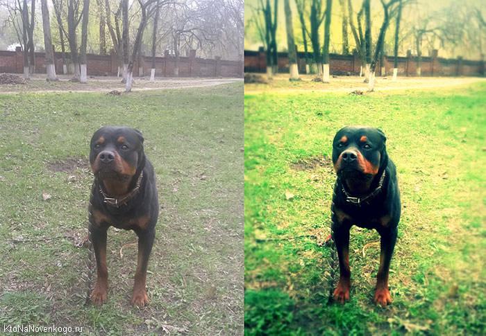 собака до и после редактирования
