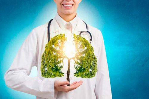 Дерево в руках у врача-пульмонолога