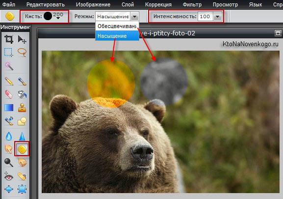 Улучшаем качество фото в онлайн редакторе