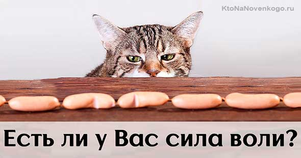 Воля у кота